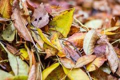 Foglie di autunno sporche immagine stock