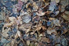 Foglie di autunno sporche sfondo naturale per il sito Web o i dispositivi mobili fotografia stock libera da diritti