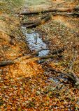 Foglie di autunno su erba Immagine Stock