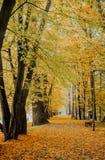 Foglie di autunno su erba Immagini Stock Libere da Diritti