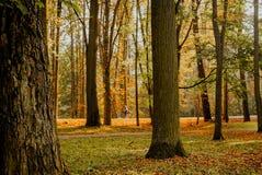 Foglie di autunno su erba Immagini Stock