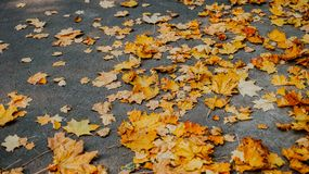Foglie di autunno su erba Fotografia Stock Libera da Diritti