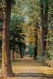 Foglie di autunno su erba Fotografia Stock