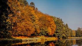 Foglie di autunno su erba Immagine Stock Libera da Diritti