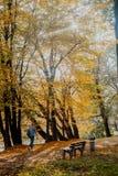 Foglie di autunno su erba Fotografie Stock Libere da Diritti