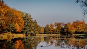 Foglie di autunno su erba Fotografie Stock