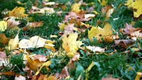 Foglie di autunno su erba video d archivio