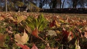 Foglie di autunno su erba archivi video
