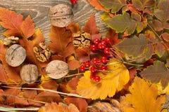 Foglie di autunno su fondo di legno, bacca e dado rosso di viburno, concetto di stagione della natura ed oggetto Fotografia Stock Libera da Diritti