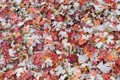 Foglie di autunno su terra Immagine Stock Libera da Diritti