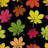 Foglie di autunno su un fondo nero Fotografie Stock Libere da Diritti