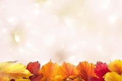 Foglie di autunno su una luce Immagine Stock