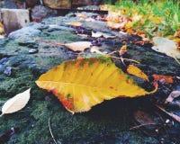 foglie di autunno su una parete di pietra Fotografia Stock Libera da Diritti
