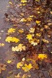 Foglie di autunno su una pozza con l'ombra dell'albero Immagine Stock