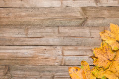 Foglie di autunno su una tavola Fotografia Stock