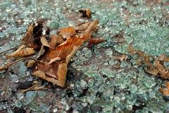 Foglie di autunno su vetro rotto Immagini Stock
