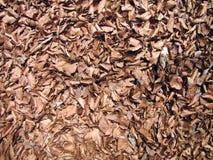 Foglie di autunno sui precedenti al suolo immagine stock