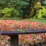 Foglie di autunno sul banco in parco Fotografie Stock