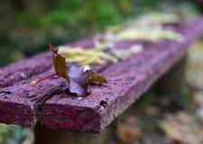 Foglie di autunno sul banco in parco Immagini Stock Libere da Diritti