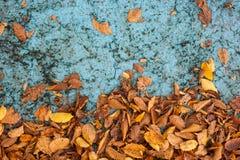 Foglie di autunno sul fondo del blu di lerciume Fotografie Stock