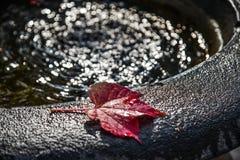 Foglie di autunno sul lavandino dell'acqua con la luce del sole fotografia stock