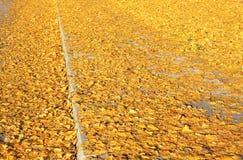 Foglie di autunno sul modo Fotografia Stock