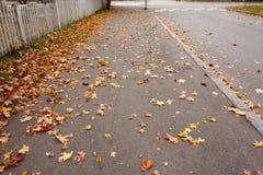 Foglie di autunno sul passaggio pedonale nel vecchio distretto del museo di Kouvola, Finlandia Fotografie Stock Libere da Diritti