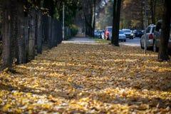 Foglie di autunno sul passaggio pedonale Stagioni cambianti Immagine Stock Libera da Diritti