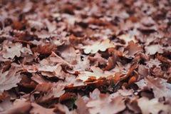 Foglie di autunno sul pavimento della foresta fotografia stock