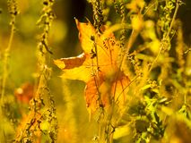 Foglie di autunno sul sole e sugli alberi vaghi Bello BAC di autunno immagini stock