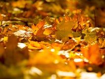Foglie di autunno sul sole e sugli alberi vaghi Bello BAC di autunno immagini stock libere da diritti