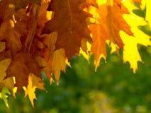 Foglie di autunno sul sole e sugli alberi vaghi Bello BAC di autunno immagine stock libera da diritti