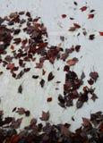 Foglie di autunno sulla parete fotografie stock