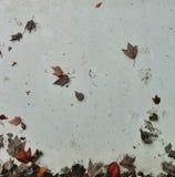 Foglie di autunno sulla parete immagine stock
