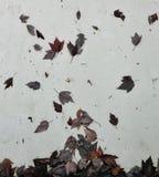 Foglie di autunno sulla parete immagini stock