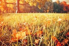 Foglie di autunno sulla priorità alta nel parco nell'alba nei toni d'annata Fotografia Stock