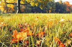 Foglie di autunno sulla priorità alta nel parco nell'alba nei toni d'annata Fotografia Stock Libera da Diritti