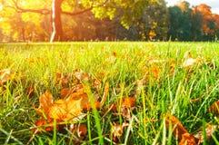 Foglie di autunno sulla priorità alta nel parco nella mattina soleggiata Fotografia Stock