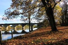 Foglie di autunno sulla sponda del fiume Fotografia Stock Libera da Diritti