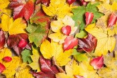 Foglie di autunno sulla tavola Immagini Stock Libere da Diritti