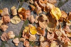Foglie di autunno sulla terra Fotografia Stock