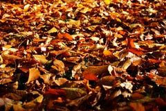 Foglie di autunno sulla terra in parco Immagini Stock