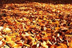 Foglie di autunno sulla terra in parco Fotografie Stock Libere da Diritti