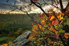 Foglie di autunno sulle rocce al tramonto Fotografie Stock