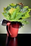 Foglie di autunno in tazza rossa Immagini Stock