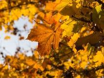 foglie di autunno un bello giorno Fotografia Stock Libera da Diritti