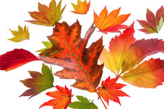 Foglie di autunno variopinte Fotografie Stock