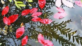 Foglie di autunno variopinte che riflettono nell'acqua stock footage