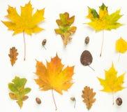 Foglie di autunno variopinte e fondo della ghianda Priorità bassa di autunno Concetto di giorno di ringraziamento Disposizione pi Immagine Stock