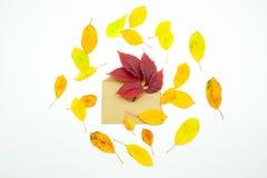 Foglie di autunno variopinte isolate con la busta su fondo bianco Fotografia Stock